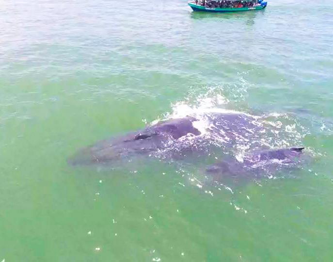Avistamiento de ballenas 1